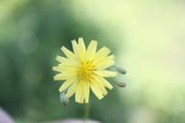 一朵美丽的小花