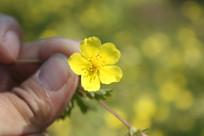 一朵漂亮的小黄花