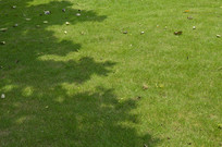 植被绿地草坪