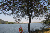 杭州湘湖碧水蓝天与大树