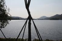 杭州湘湖波光粼粼水面与树干