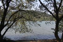 杭州湘湖大树间的山水
