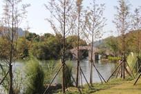 杭州湘湖拱桥与水边树林