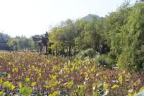 杭州湘湖荷叶环绕凉亭
