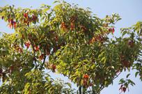 杭州湘湖蓝天与大树