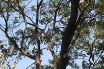 杭州湘湖树枝间见蓝天