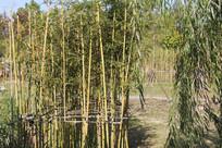 杭州湘湖小竹林