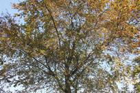杭州湘湖枝叶茂密的大树