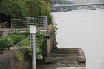 杭州运河岸边树木草丛