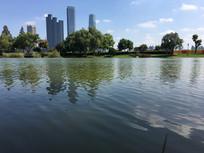 碧绿的湖泊园林景观