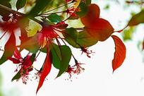 彩色叶子与花蕊