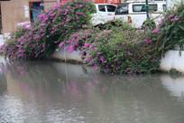 长在河边的粉红色鲜花
