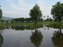 池塘边的草地与绿树