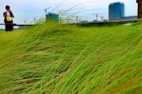 风中茂密地小草