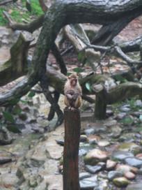 母后与小猴站在木桩上