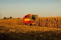 收割机收割玉米