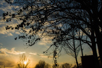树木枝叶在夕阳中的剪影