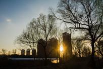 夕阳树木剪影楼房