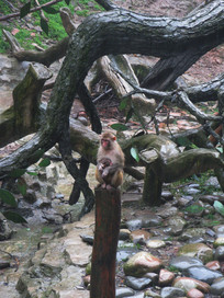 雨中护着幼崽的猴子