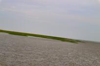 长了水草的海边沙滩