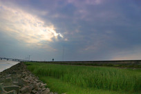 海边的石堤与水草
