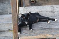 趴在地上的黑猫