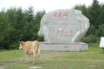 五台山石碑与牛