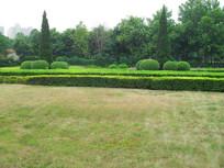 公园景观树和干旱的草坪