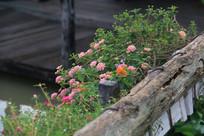 护栏外的粉色野花