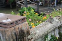 护栏外的黄色野花