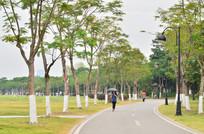 树木小路风景