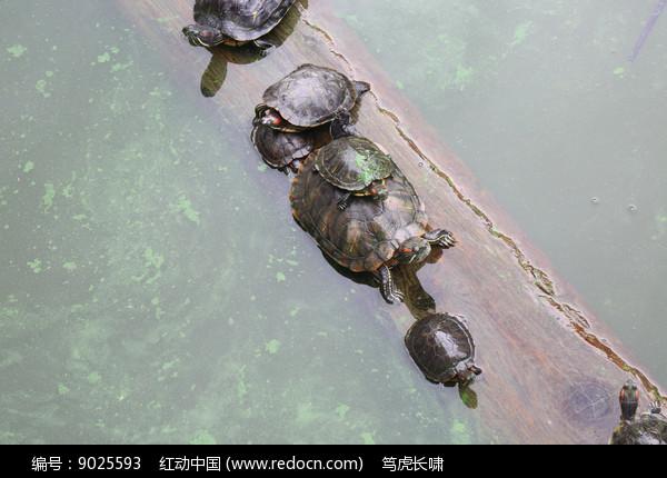 乌龟爬行图片