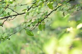 夏天的树叶