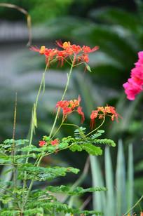 一株美丽的小花