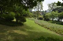 云台花园草坪绿化
