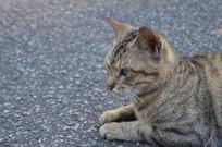 凝视的小猫