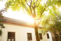 岳麓书院秋日阳光绿树