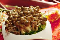 火锅配菜蘑菇