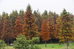 一片彩色林带