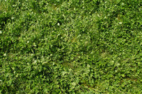 绿绿的草地