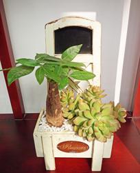 绿植小台摆图片素材