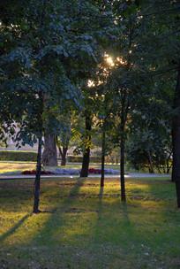 树木逆光倒影