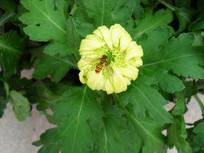 一朵小花和一只小蜜蜂