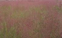 紫色的草地背景素材