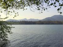 杭州西湖水中垂柳