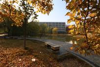 黄叶下的教学楼