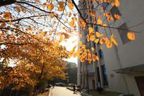 理工大的秋色校园