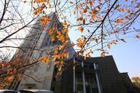 理工大教学楼前的黄叶
