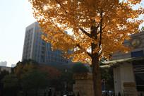 武汉的校园秋色