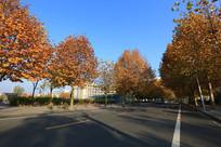 校园的秋色满园